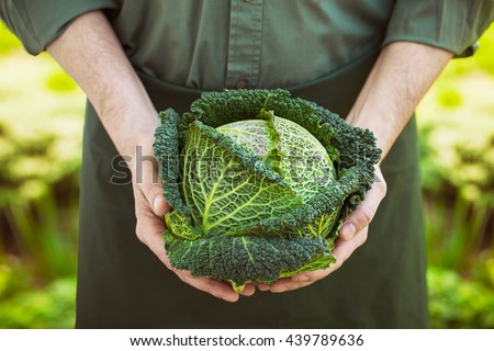 Organic vegetables. Farmers hands with freshly harvested vegetables. Fresh organic kale. - stock photo