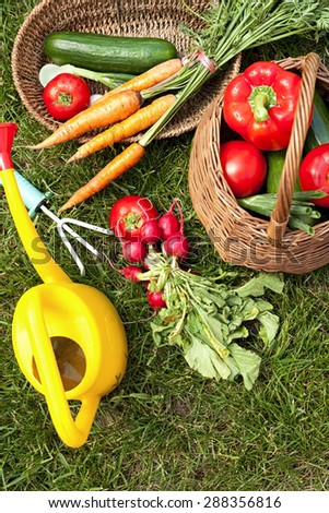 organic vegetables in the garden - stock photo