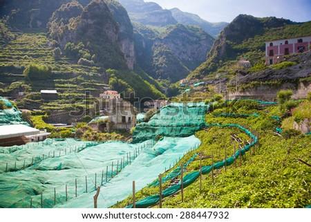 Organic vineyards and orange garden hills over Amalfi Coast, typical Ravelo landscape. - stock photo