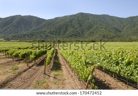 organic wine producing vineyard planted among wildflowers and hills - stock photo