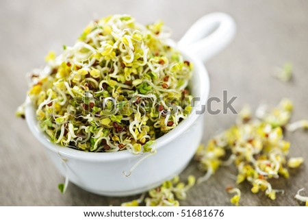 Organic young alfalfa sprouts in a cup