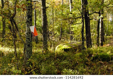 Orienteering control point in a sunny forest - stock photo