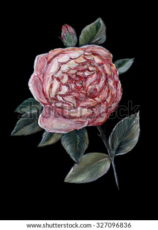 Original art, oil painting of an English rose from the rose breeder David Austin - stock photo