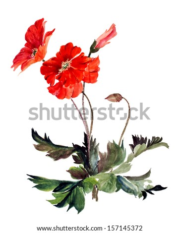 original art, watercolor painting of red poppy flower - stock photo