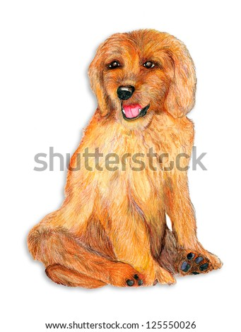 original artwork, pencil and watercolor drawing of Goldendoodle puppy - stock photo