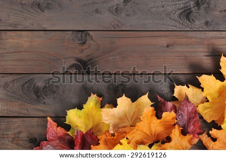 original autumn foliage in different colors on wooden floor  - stock photo
