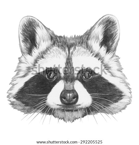 Original Drawing Raccoon Isolated On White Stock ... Raccoon Face Illustration