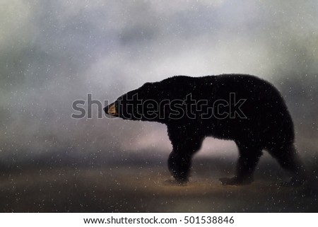 Original photograph of a Pennsylvania black bear in winter transformed into a painting