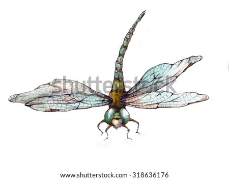 Original Watercolor Blue and Green Dragonfly Illustration - stock photo