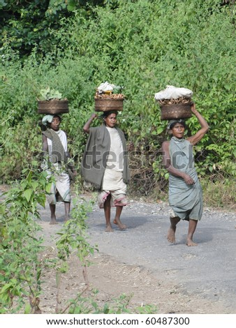 ORISSA INDIA - NOV 11 :Women carry goods on their heads for weekly market on Nov 11, 2009 in Orissa, India
