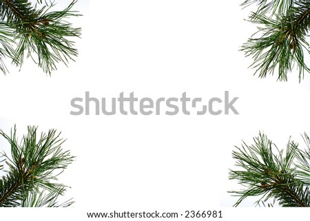 Ornament for Greeting card with Pine - stock photo