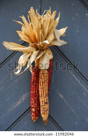 Ornamental Corn on Door - stock photo