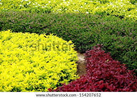Ornamental garden - stock photo