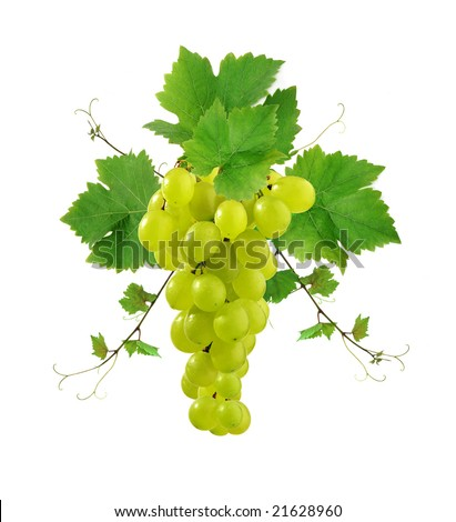 Ornamental grape with leaves - stock photo