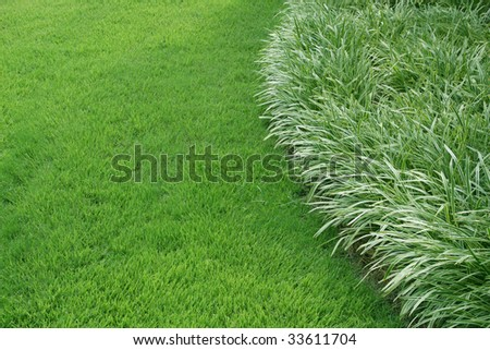 Ornamental Grass Edge with Space - stock photo