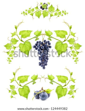 Ornamental motif of blue wine grape isolated on white background - stock photo