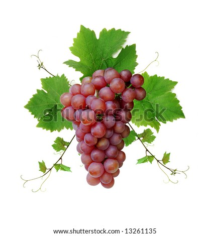 Ornamental motif of pink wine grape, isolated on white background - stock photo