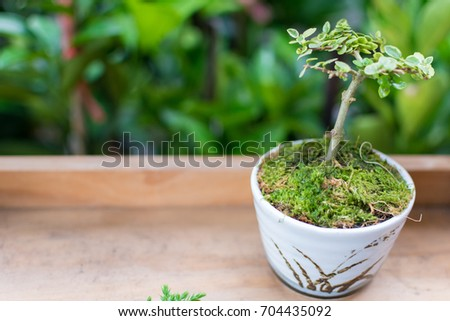 Ornamental plant in pot on wooden table