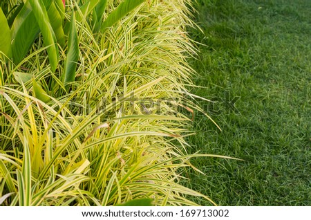 ornamental plants and the grass of gardening - stock photo