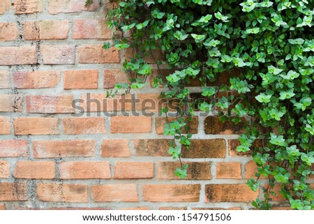 ornamental plants on brick wall