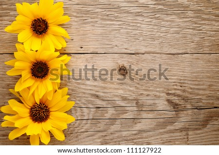 Ornamental sunflowers on wooden background - stock photo
