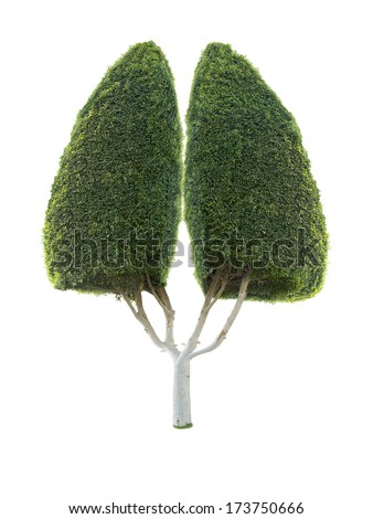 ornamental tree in the form of human lung isolated on a white background
