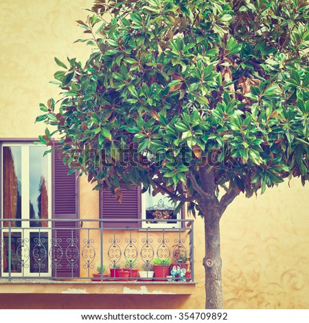 Ornamental Tree on the Background of the Facade of Italian House with Balcony, Instagram Effect - stock photo