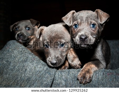 Orphan pups wait for a new life - stock photo