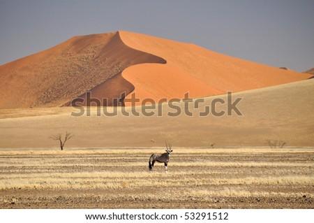 Oryx in the Namibia Desert - stock photo