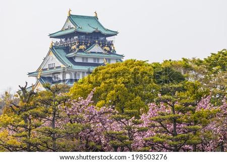 Osaka Castle in Japan under cherry blossom - stock photo
