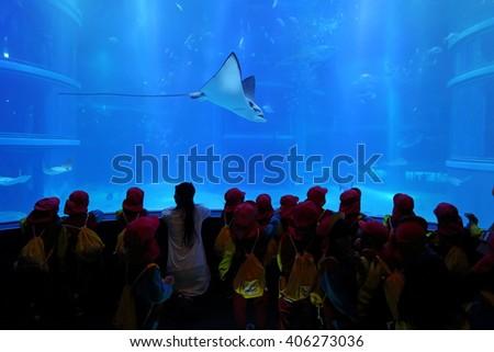 OSAKA, JAPAN - NOV 2: Unidentified many children learning and education of sea creatures at the Osaka Aquarium Kaiyukan on November 2, 2015 in Osaka, Japan.   - stock photo