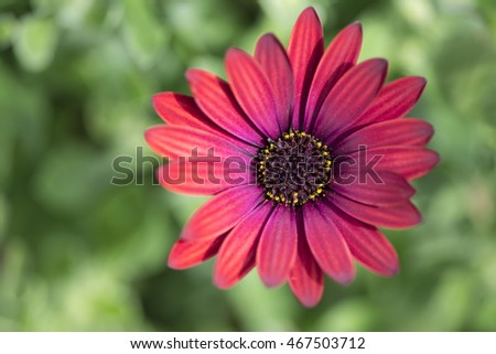 everything else stock images, royaltyfree images  vectors, Beautiful flower