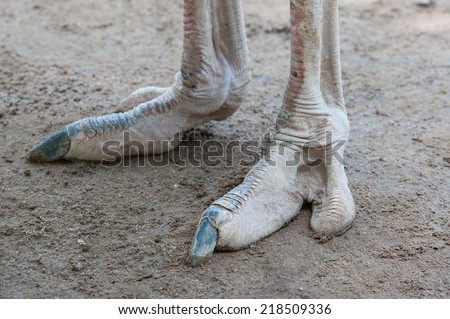 ostrich claws - stock photo