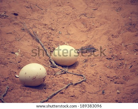 Ostrich egg - stock photo