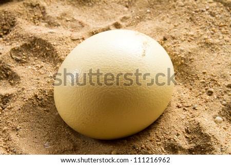 Ostrich eggs - stock photo