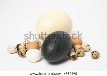 emu and ostrich eggs hatch As one would expect from the world's largest bird, ostrich eggs are comparatively huge and have very special requirements for hatching there are very few incubators on the market that can handle the immense size and special needs for ostrich egg incubation.