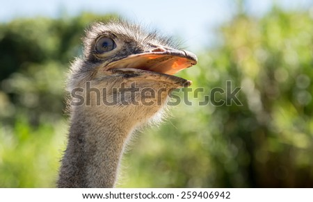 ostrich looking meaningful and suggestive