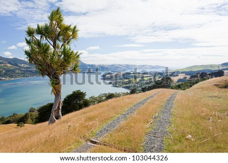 Otago peninsula coastal landscape scenery with cabbage tree in foreground, South Island near Dunedin, New Zealand - stock photo