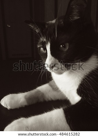 Our cat patches portrait done in black and white