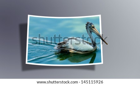 Out Of Bounds: Pelican - stock photo
