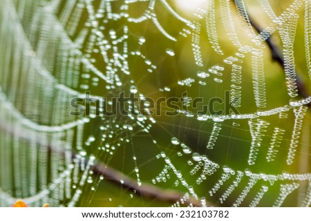 Out of focus  the dew on the cobweb abstract background in nature - stock photo