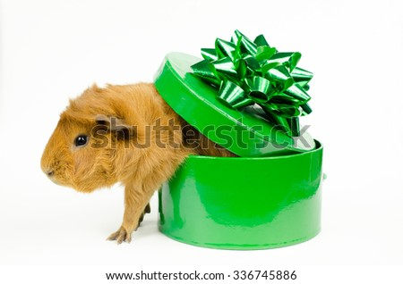 out of the box...into your heart - stock photo