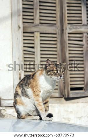 Outdoor cat. - stock photo