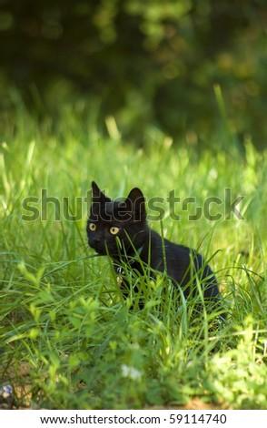 Outdoor cat - 14-weeks-old - stock photo