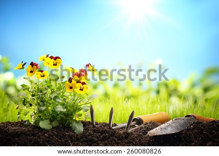 Outdoor gardening tools and flowers,Copy space for your text. - stock photo