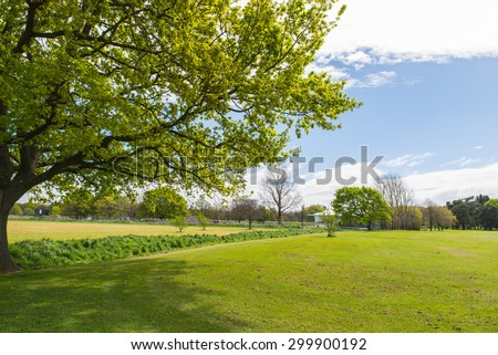 Outdoor greenery field - stock photo