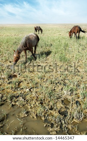 Outdoor photo of three serene horses eating the grass in swamp - stock photo