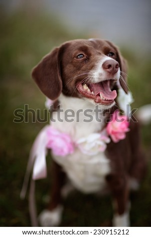 Outdoor Portrait of a dog at a Lake - stock photo