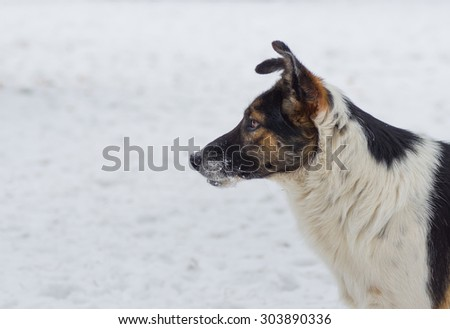 Outdoor portrait of three-colored mixed breed dog - stock photo