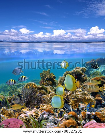 Over and under sea with cloudy blue sky reflected on water surface, underwater part with a colorful coral reef and tropical fish - stock photo